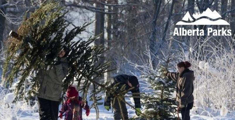 Christmas Tree Cutting in Cypress Hills Starts Dec 1st!